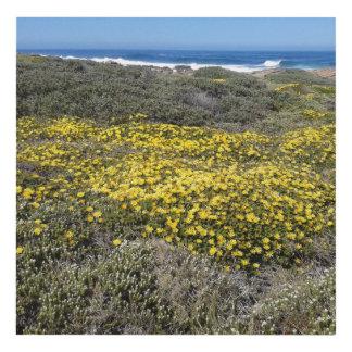 Flores salvajes y paisaje marino cuadro