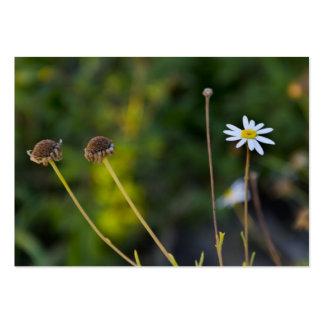 Flores Tarjetas De Visita Grandes