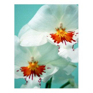 """""""Flores tropicales hawaianas de las señoras del Postal"""