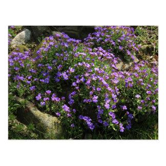 Flores violetas postales