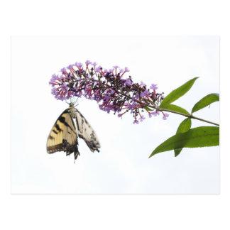Flores y postal púrpuras largas de la mariposa