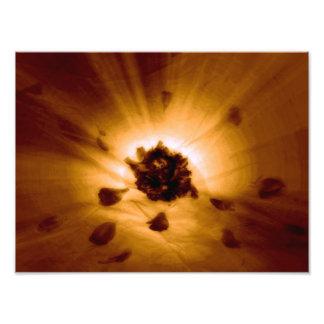 Flower power fotografías