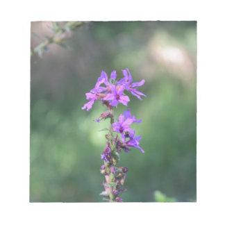 flower_purple.JPG Bloc De Notas
