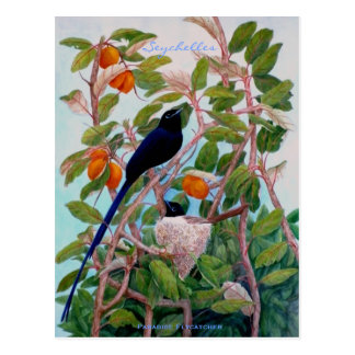 Flycatcher del paraíso de Seychelles Postal