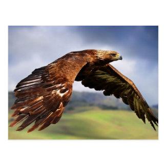 Flying oros Eagle (Aquila chrysaetos)