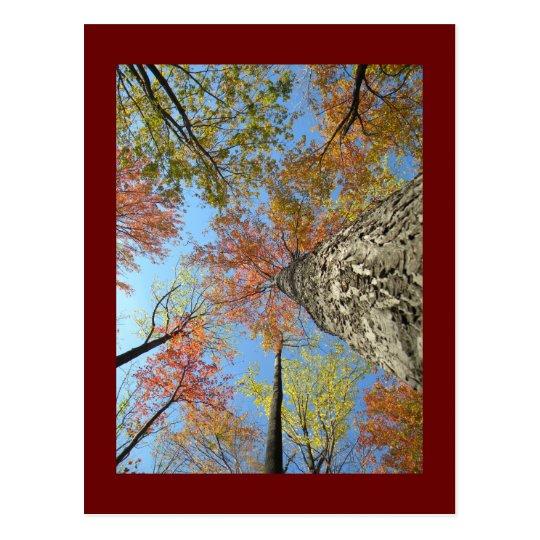 Follaje de otoño que mira para arriba postal