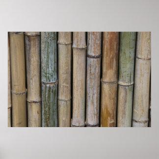 Fondo de bambú póster