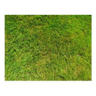 Fondo de la textura del modelo de la hierba verde postal