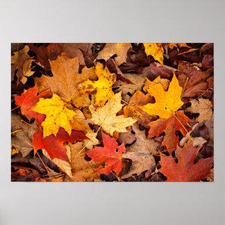 Fondo de las hojas de otoño coloridas en bosque impresiones