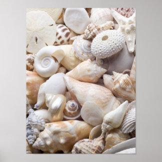 Fondo de Shell del mar de la Florida - la playa Póster