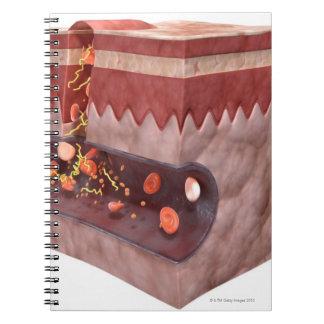 Formación del coágulo de sangre cuaderno