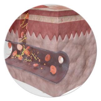 Formación del coágulo de sangre platos