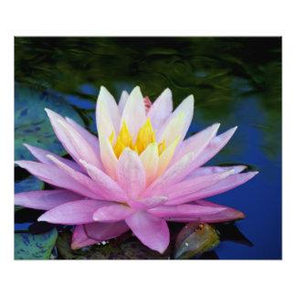 Foto Agua rosada y poner crema lilly