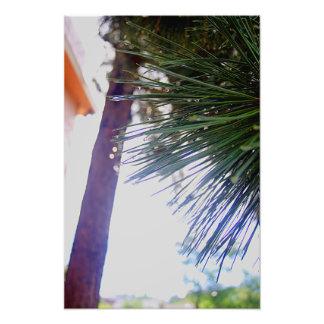Foto Agujas Spruce con gotas de lluvia