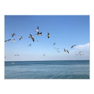 Foto algunos pájaros impresionantes en la playa