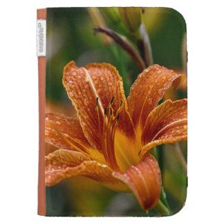 Foto anaranjada del Daylily y de la flor de las