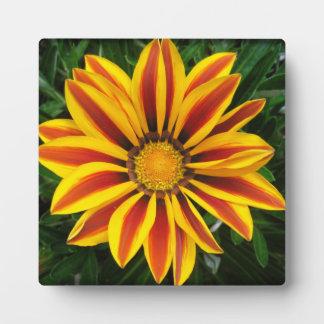 Foto anaranjada hermosa de la flor de Sun Placa Expositora