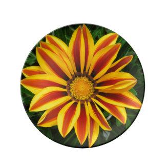 Foto anaranjada hermosa de la flor de Sun Plato De Porcelana