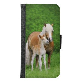 Foto animal del potro lindo de los caballos de