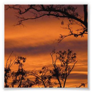 Foto Árbol de la puesta del sol