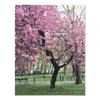 Foto Árbol rosado bonito NYC New York City de la flor