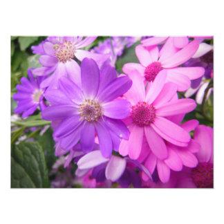 Foto arbusto rosado púrpura de la belleza vibrante