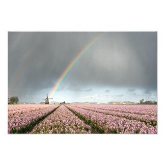 Foto Arco iris sobre jacintos y un molino de viento en