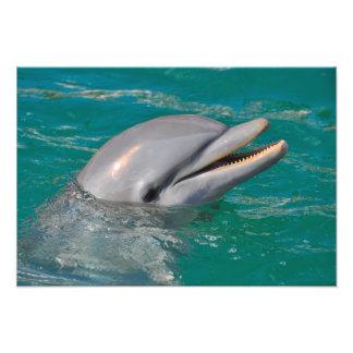 Foto Ascendente cercano del delfín