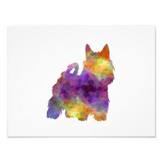 Foto Australian Silky Terrier in watercolor