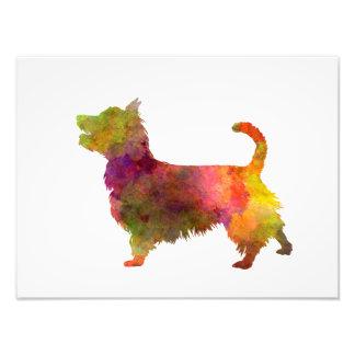 Foto Australian Terrier in watercolor