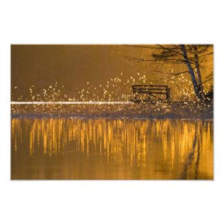Foto Banco solo por el lago en la luz de oro