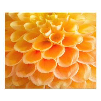 Foto Belces anaranjadas
