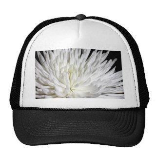 Foto blanca de las flores de las momias de la flor gorras