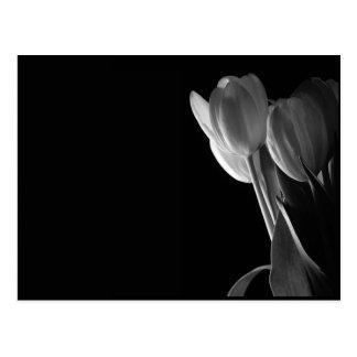 Foto blanca de los tulipanes en fondo negro postal