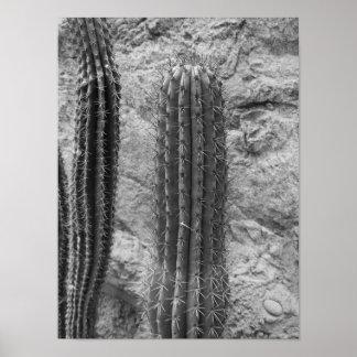 Foto blanco y negro del cactus póster