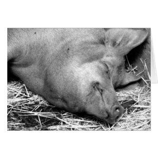 Foto blanco y negro del cerdo el dormir - tarjetas