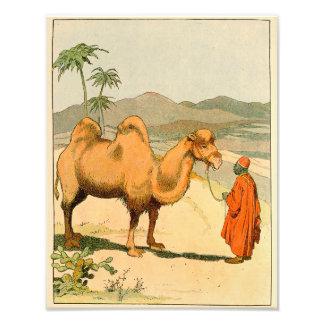 Foto Camello de la chepa del asiático dos