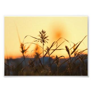 Foto Cañas en la luz de la puesta del sol en la
