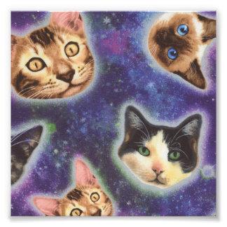 Foto cara del gato - gato - gatos divertidos - espacio