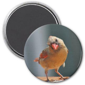 Foto cardinal femenina imán redondo 7 cm