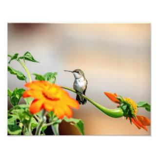 Foto colibrí 14x11 en una planta floreciente