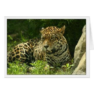 Foto de Jaguar de la tarjeta en blanco