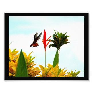 Foto de la actitud 2 del colibrí