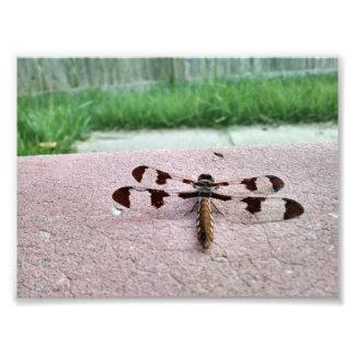 Foto de la libélula del Whitetail