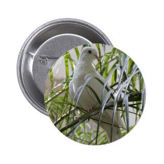 Foto de la paloma blanca hermosa chapa redonda de 5 cm