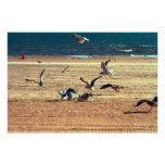 Foto de la playa w/Seagulls de Coney Island