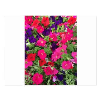 Foto de las flores postal