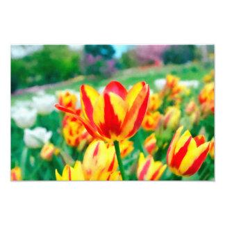 Foto de los tulipanes