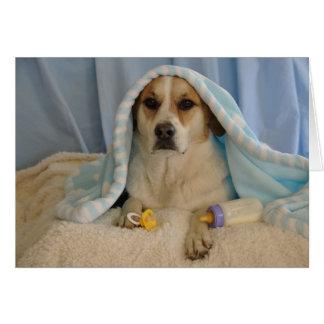 Foto de un perro como bebé tarjeta de felicitación