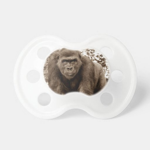 Foto del animal de la fauna del primate del mono d chupete de bebe